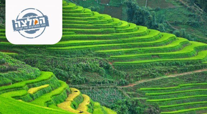 וייטנאם – סאפה: בין שדות האורז